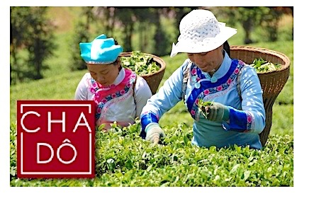 herbata Cha Do - certyfikat bio, fairtrade - premium tea - herbaty dzikie